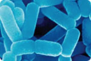 Lactobacillus casei19-21