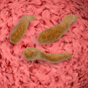 H. pylori can be a very bad actor